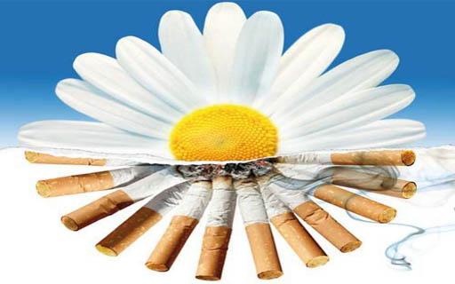 Вологодчина без табака
