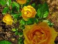 """""""Как хороши и свежи розы"""""""